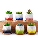 HomeNote 2.5inch Succulent Planter Pots Set Flower Cactus Ceramic Holder Unique Color Glaze White Container Kit with Bamboo Tray for Home Decor(Pack of 6)