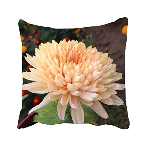 Dolores Joule Cotton Linen Beautiful_Chrysanthemum Throw Cushion Cover Home Decorative Indoor/Outdoor Pillow Sham 18 X 18 Inch