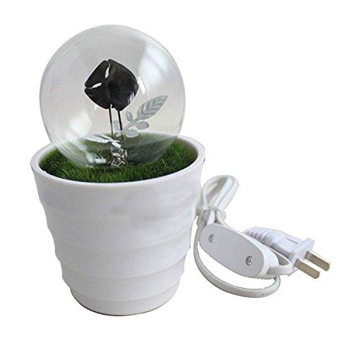 Bulb Potted Night Light, Light-Emitting Plants, Create Romantic LED Night Light, Decorative (4w Clear Night Light)