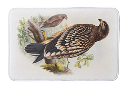 Aomsnet Spotted Eagle John Gould Birds of Great Britain Bathroom Decor Mat, Shower Rug Mat Water Absorbent Fast Drying Kitchen, Bedroom, Spa Tub. 30