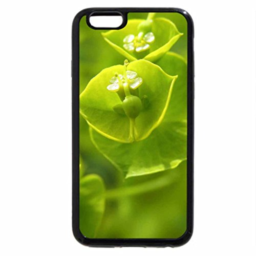 iPhone 6S / iPhone 6 Case (Black) EUROPEAN WOOD SPURGEON PLANT
