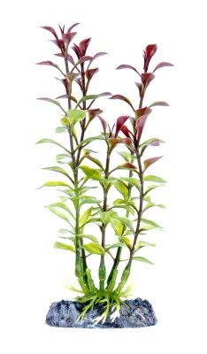 - Penn Plax PP05538 Blooming Ludwigia Red Small
