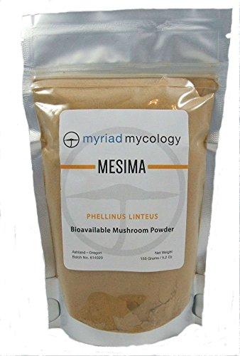 Myriad Mycology Mesima Mushroom Powder 5.2oz or 150g, Made in USA Sang Huang