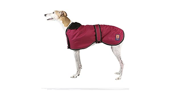 Ginger Ted ducha impermeable perchero de pared de Greyhound/Perro ...
