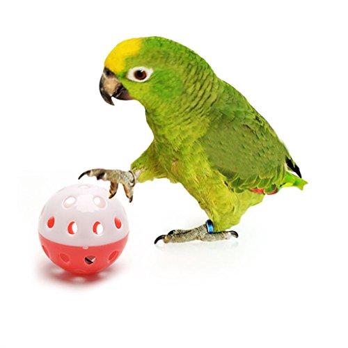 Delight eShop Pet Parrot Toy Bird Hollow Bell Ball ...