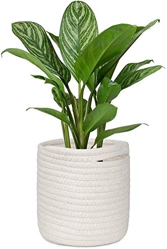 HOMENOTE 6.3 Elegant Basic Plant Pot Cover for Small Plants, Succulents, Herbs Cream White Woven Plant Basket for 4.4 to 5.5 Planter Pot Small Cotton Rope Storage Organizer Basket for Table or Desk