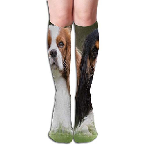 Socks Royal Charles Spaniel Dogs Stylish Womens Stocking Gift Sock Clearance For Girls (Spaniel Needlepoint)