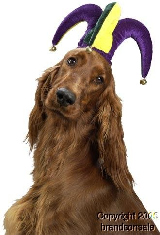 Jolly Jester Hat Pet Costume - Small ()