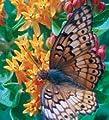 David's Garden Seeds Wildflower Texas Native Butterfly Retreat Mix NS0031 (Multi) 500 Open Pollinated Seeds