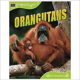 Book Orangutans (QEB Animal Lives) by Sally Morgan (2007-01-01)
