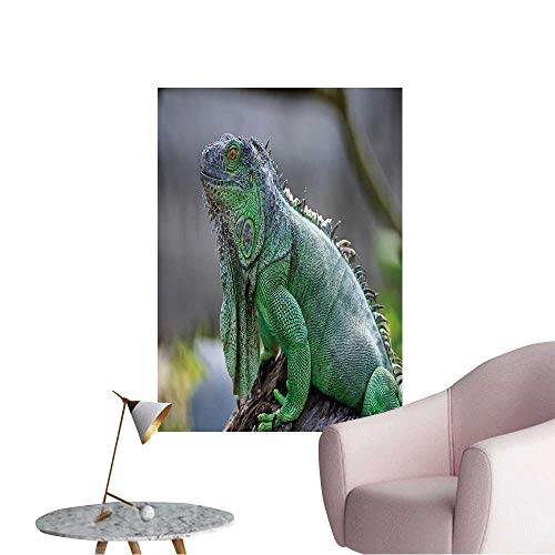 Wall Decoration Wall Stickers Female Green Iguana (Iguana Iguana),Side Profile Print Artwork,12