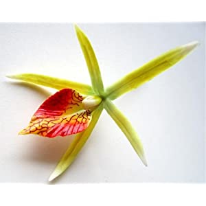"""(24) Yellow Hawaiian Cymbidium Cattleya Silk Flower Heads - 4"""" - Artificial Flowers Heads Fabric Floral Supplies Wholesale Lot for Wedding Flowers Accessories Make Bridal Hair Clips Headbands Dress 116"""