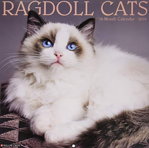 Ragdoll Cat Der Beste Preis Amazon In Savemoneyes