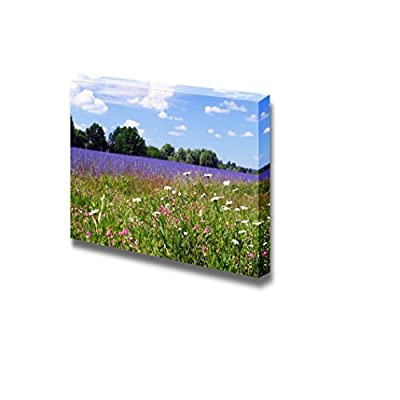 Beautiful Summer Landscape of Flowering Meadows Bright Blue Sky White Clouds and Groves on The Horizon on a Sunny Day - Canvas Art Wall Art - 24