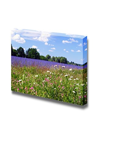 Beautiful Summer Landscape of Flowering Meadows Bright Blue Sky White Clouds and Groves on the Horizon on a Sunny Day Wall Decor ation