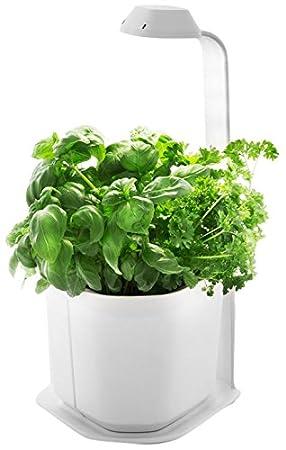 Tregren Genie Blanc 3 Plantes Mini Jardiniere Et Potager D