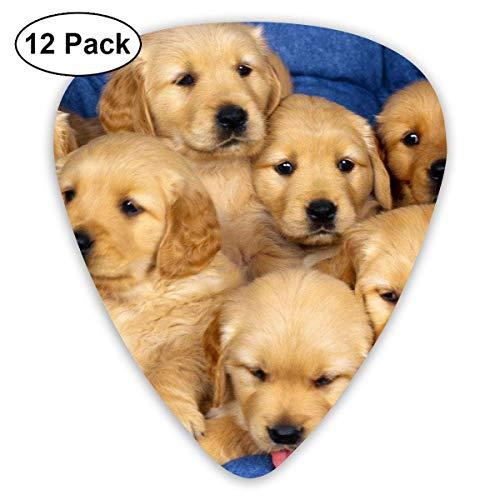 Anticso Cute Golden Retriever Puppy Guitar Picks Plectrums Acoustic Guitar Ukulele Picks 0.46 Mm, 0.73mm, 0.96 Mm,12 - Puppies Pics Of