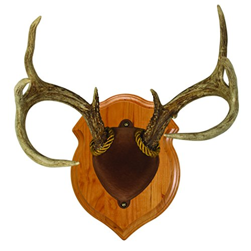 Walnut Hollow Country Deluxe Antler Display Mounting Kit in Solid Cherry for Mule Deer & Whitetail Deer