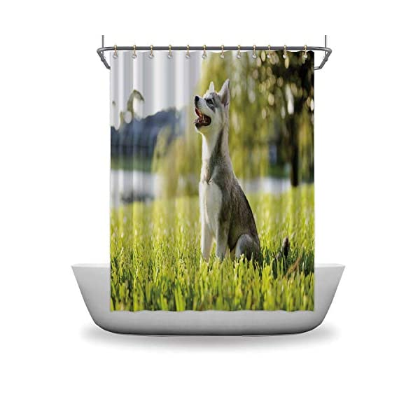 Alaskan Malamute Bath Curtains Shower,Klee Kai Puppy Sitting on Grass Looking Up Friendly Young Cute Animal DShower Curtainsrative for Home,59''W x 71''H 3