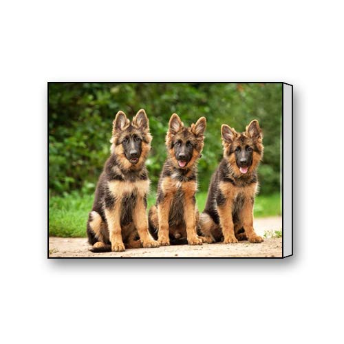 Flipped Summer Funny Laughing German Shepherd Dog Friends Custom Canvas Prints for Living Room Bedroom Home Office Decor 10