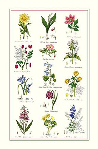 McCAW ALLAN Samuel Lamont, Botanic Garden Kitchen/Tea Towel, 100 Percent Cotton, Imported from UK (Kitchen Towel Portmerion)