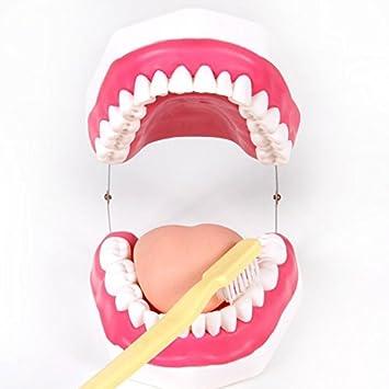 Levin dentaire dent de nouvelle Marque Care Modèle avec brosse à dents Taille Ap-th1101: Amazon.es: Deportes y aire libre