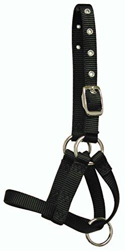 Hamilton 5/8 Inch Alpaca Halter with Buckle Adjustable Head Strap, Average, Black