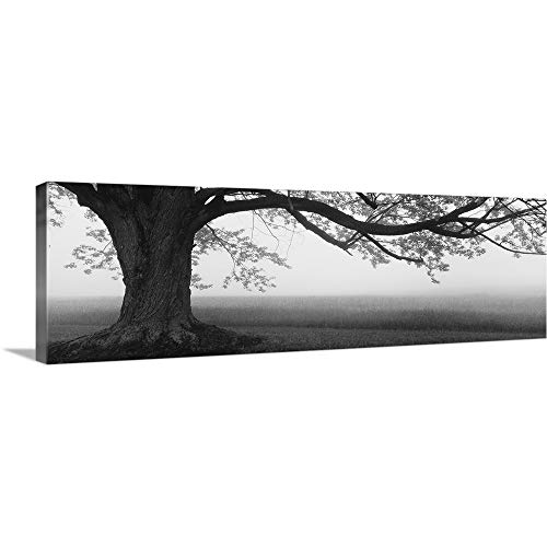 - GREATBIGCANVAS Gallery-Wrapped Canvas Entitled Tree in a Farm, Knox Farm State Park, East Aurora, New York State by 48