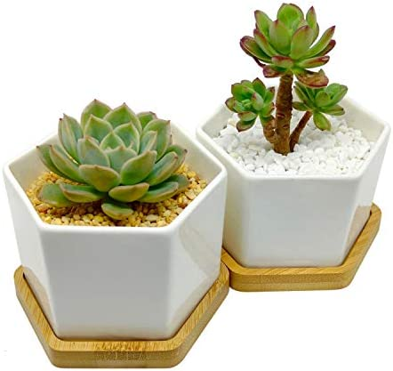 4-Inch Hexagonal White Ceramic Succulent Planter with Bamboo Tray Set of Two Minimalist Design