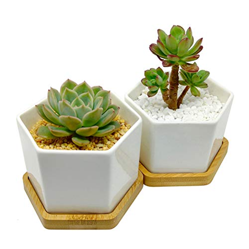 4-Inch Hexagonal White Ceramic Succulent Planter with Bamboo Tray | Set of Two | Minimalist ()