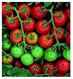 Tommy Toe Cherry Tomato 35 Seeds - Heirloom
