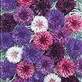 Fiore - Kings Seeds - Confezione Multicolore - Fiordaliso - Double Mix