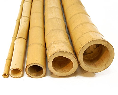 1'' x 8' Bamboo Poles Natural (50 Poles) by Forever Bamboo