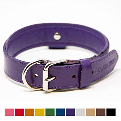 Logical Leather Deluxe Padded Genuine Full Grain Leather Collar (Large, Purple)