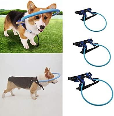 Ciego Perro Cachorro Anillo Anticolisión Complimentos Mascota ...