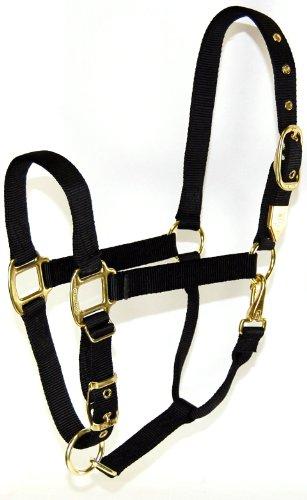 Web Halter (Hamilton 1-Inch Nylon Halter with Adjustable Chin, Black - Draft Horse Size)