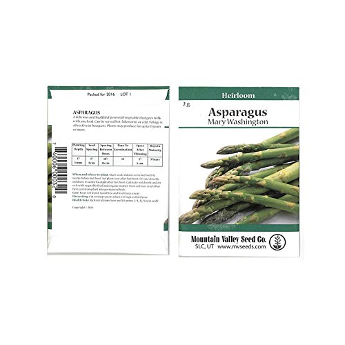 Asparagus Seeds - Jersey Giant Hybrid - Packet: Approx 7 Seeds - Non-GMO Vegetable Garden Seeds - Hybrid Asparagus