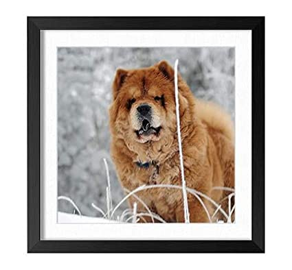 63+ Black And Brown Chow Chow