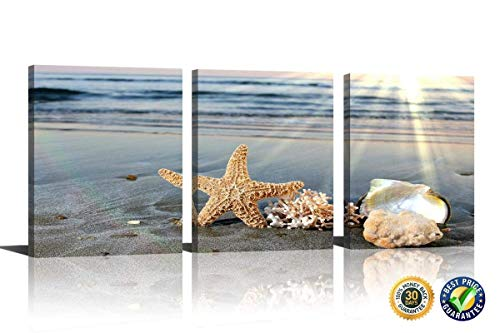 seashell pictures - 6