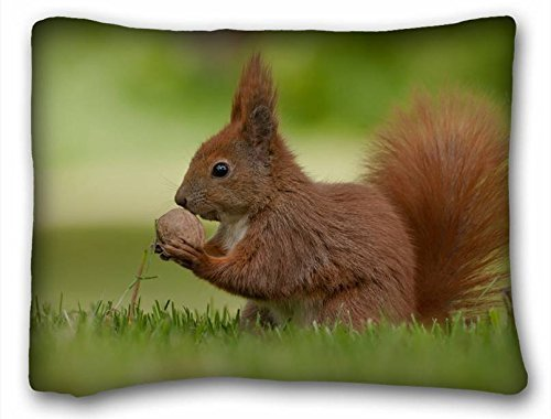 Custom ( Animals squirrel nature grass ) Zippered Body Pillow Case Cover Size 20
