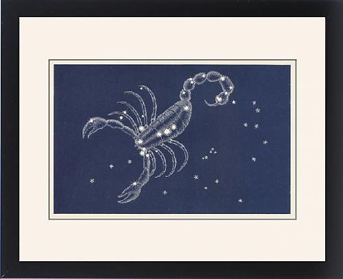 Framed Print of Scorpio by Prints Prints Prints