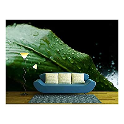 Delightful Piece of Art, Top Quality Design, Raindrops on a Green Leaf During a Raining