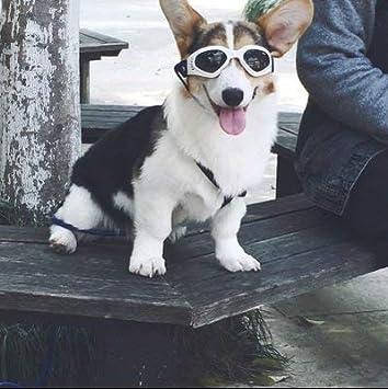 Amazon.com: Pet Leso anteojos de perro elegante Doggie ...