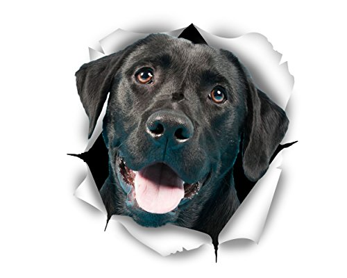 Winston & Bear 3D Dog Stickers - 2 Pack - Cute Black Labrador Retriever Stickers for Wall, Fridge, Toilet and More - Retail Packaged Black Labrador Decals