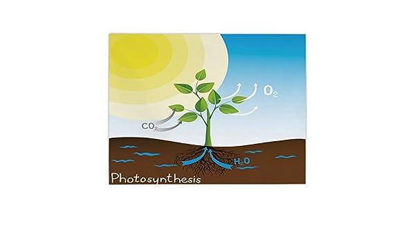 iPrint - Mantel rectangular de satén, educativo, diseño de fotosíntesis simple para plantas, moléculas de sol, cadena química, crecimiento ecológico, decorativo, multicolor, para comedor, cocina, mesa de cocina: Amazon.es: Hogar
