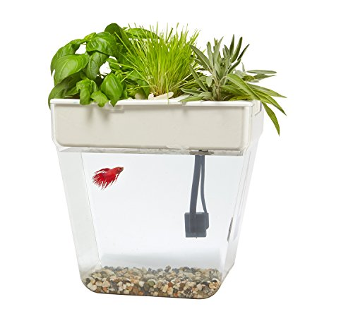 Back-to-the-Roots-Water-Garden-Fish-Tank
