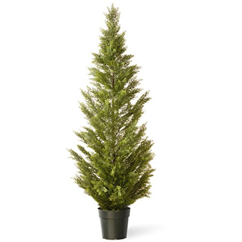National Tree 60 Inch Arborvitae Tree in Dark Green Round Plastic Pot - Christmas Trees Live