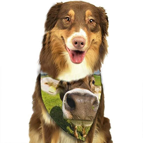 TNIJWMG Wallpaper Desktop Cow Bandana Triangle Bibs Scarfs Accessories for Pet Cats and Puppies