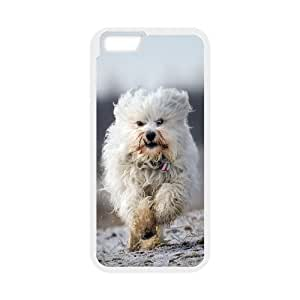 Lovely Havana Doggy IPhone 6 Cases, Iphone 6 Cases for Girls Designs Shock Absorb Tyquin - White
