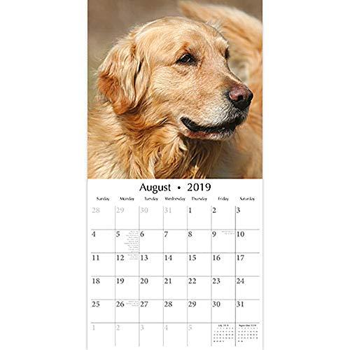 Golden Retriever Calendar 2019 Dogs Month To View